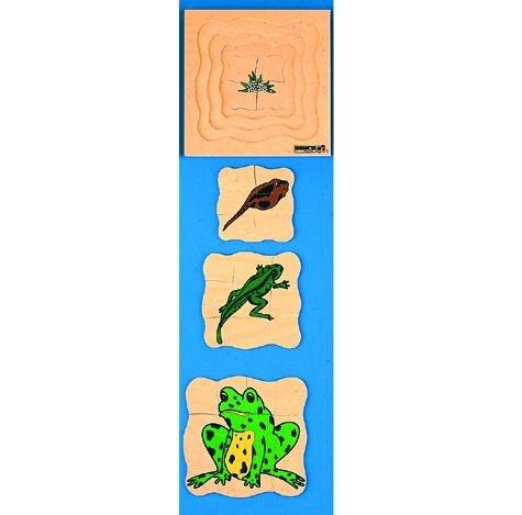 Wachstumpuzzle Frosch